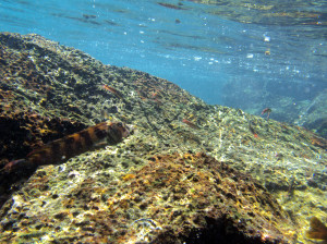 Cabo Rosa fishes