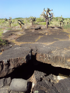 Humedales collapsed lava tunnels