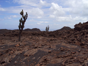 Volcan Chico cacti