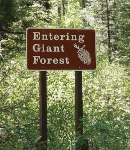 Entering Giant Forest